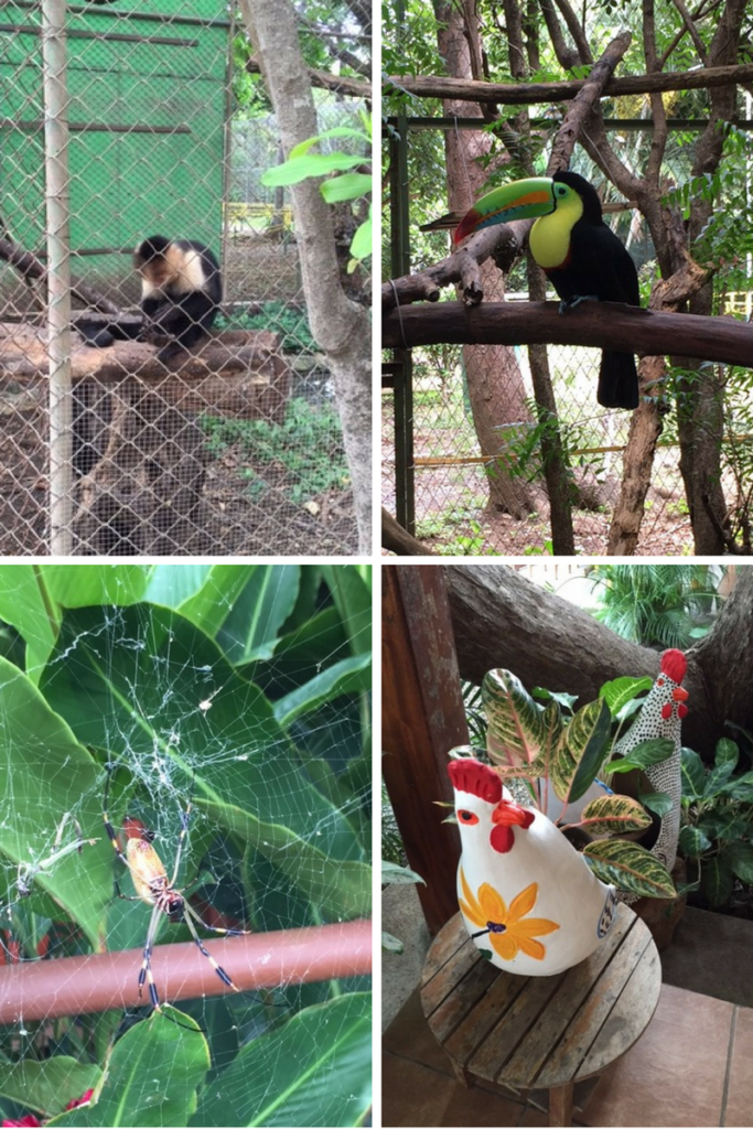 MONKEY, TOUCAN, SPIDER, CHICKENS