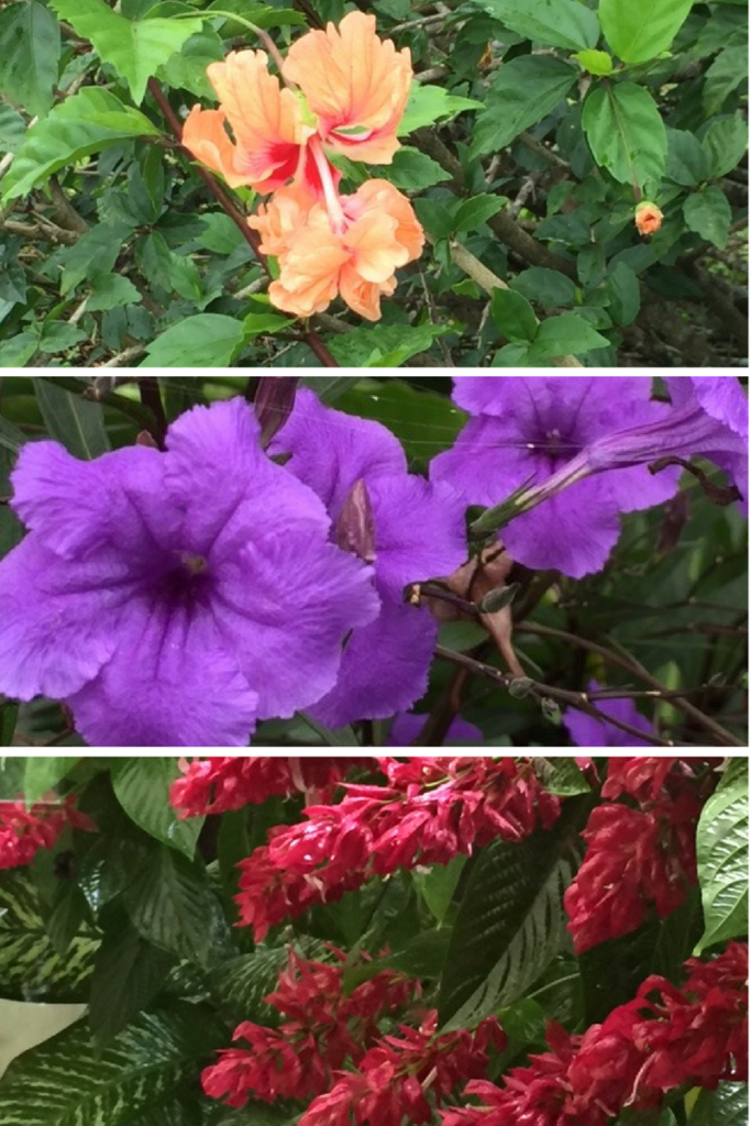 SOME KIND OF FLOWER, NOT PETUNIAS, ANOTHER KIND OF FLOWER